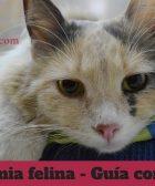leucemia-felina