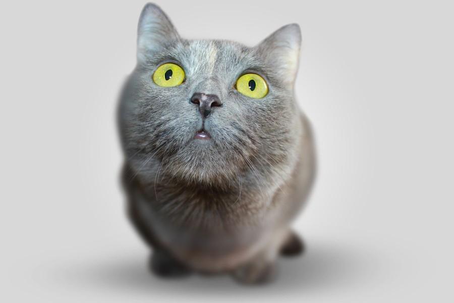 los-gatos-reconocen-su-nombre