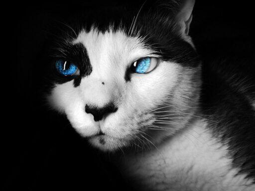 nombres-gatas-negras-blancas