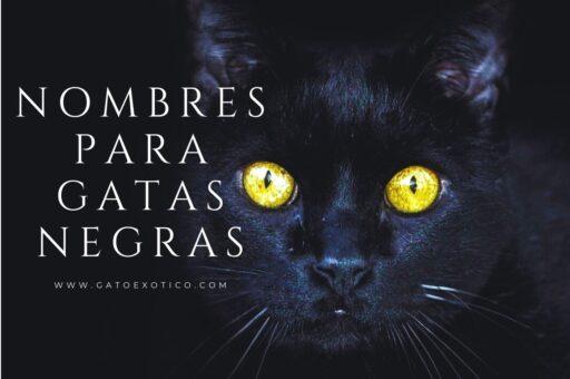nombres-para-gatas-negras