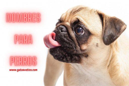 nombres-para-perros-hembra