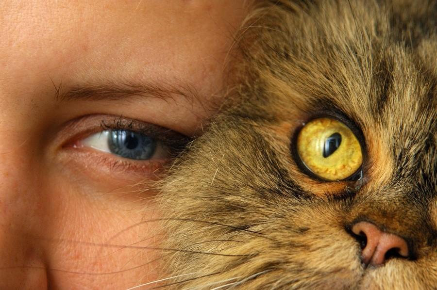 ojos-de-gato-en-persona