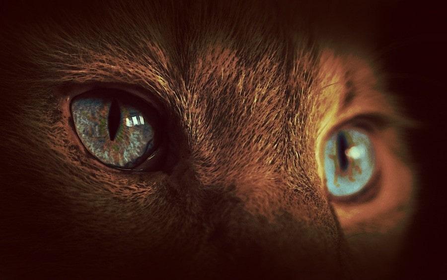 ojos-gato-brillantes
