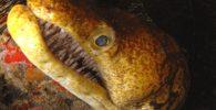 peligro-de-extincion-españa