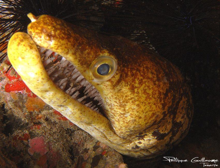 peces-en-peligro-de-extincion