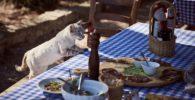 que-comen-los-gatos
