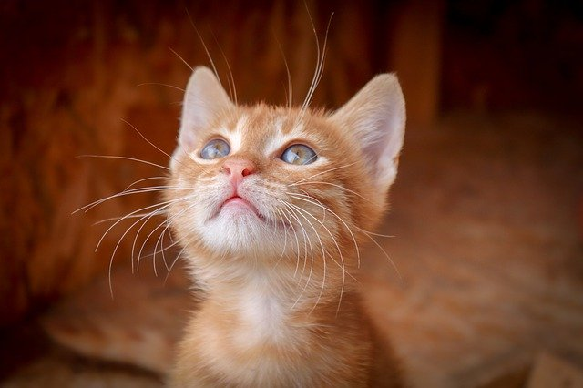 que-comen-los-gatos-bebes