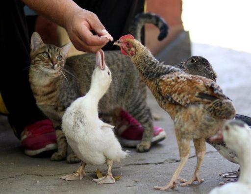 que-comen-los-gatos-callejeros