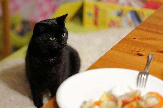 que-comen-los-gatos-de-un-mes