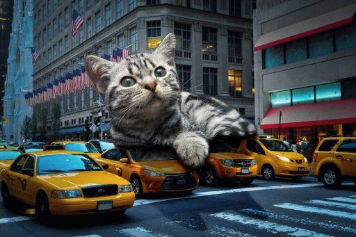 razas-de-gatos-mas-grandes