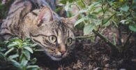 sentidos-de-los-gatos