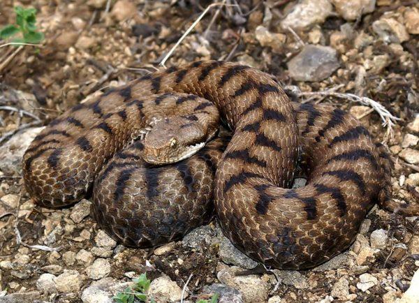 serpientes-en-peligro-de-extincion