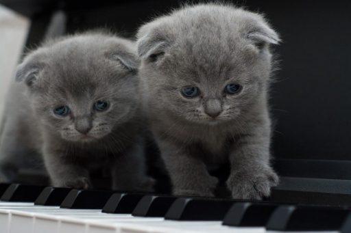 sonidos-de-gatos