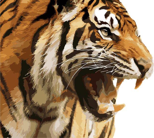tigre-en-peligro-de-extincion
